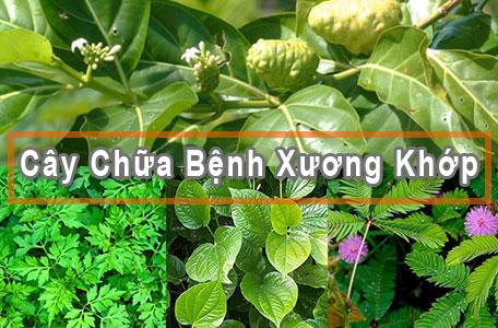 nhung-cay-chua-benh-xuong-khop-hieu-qua